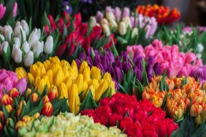 Bouquets of colorful tulips