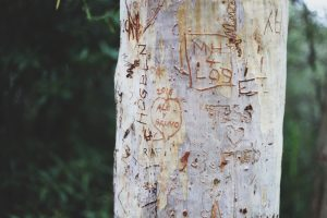Tree bark carved with initials